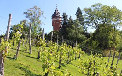 Burg, Weinberg © Landkreis Jerichower Land