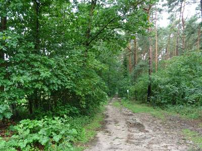 Wald & Forst © Landkreis Jerichower Land
