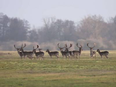 Tiergehege © Landkreis Jerichower Land